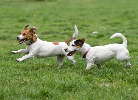 EXERCISES FOR DOGS