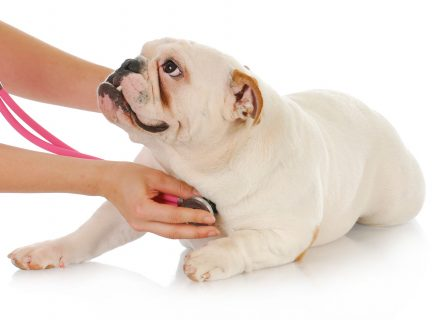 CONGESTIVE HEART FAILURE IN DOGS AND CATS