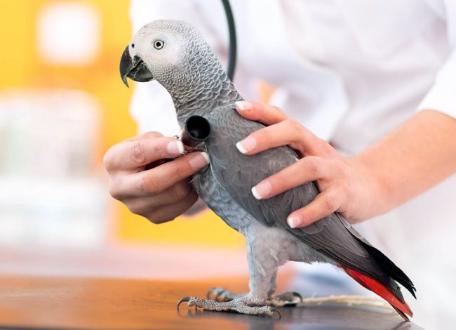 AVIAN AND EXOTIC ANIMALS
